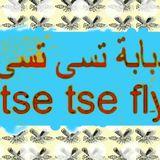 The Attic Podcast: Tse Tse Fly Middle East