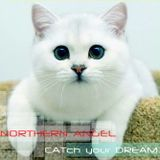 Northern Angel - CATch your Dream