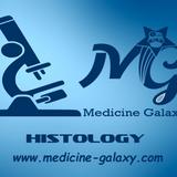 Skin-Part1-Histology-Dr.Hekmat Abdelaziz