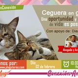 Tema: Ceguera en gatos una oportunidad y calidad de vida es posible