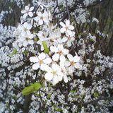 flapjackmix spring 2010