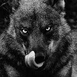 JTF HQWSS  Hunter...Good Kills  (WarMonger Mix 3 Mastered)