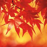 Zak Grindle Autumn 2013 Mix