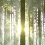 Forest Spirit - WE ARE ONE -