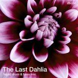 The Last Dahlia