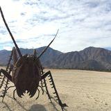 The Locust Side