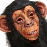 Kinky Brain Monkey ◔ Something else