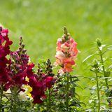 """Spring"" : Description of the spring season from Kumara vyaasa's Bhaarata (Kavya vachana program)"