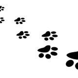 pasos-Βήματα-pas-steps