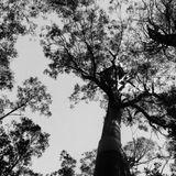 Wir und der Wald