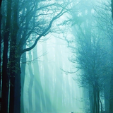 Magical Forest Vibrations