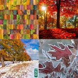 Discoveries From Last Autumn [2017] #Encore (2019-02-08)