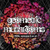 Primal bday! set @ Geometric Mushrooms (Art Cafe Club, Rybnik, 09.12.2017)