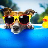 McDucks Funky Summer Mix!
