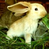 Big Easter Hardtechno Live Mix Set @DJAidgeT (25.04.2011)