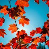 Fall'18
