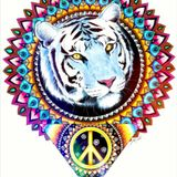 Jungle Foundations  : Tribute to Kool FM 92 - 93