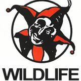 Wildlife - Main Room