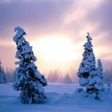 Winter 2011 // December