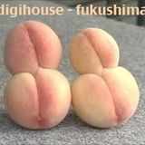 digihouse - fukushima