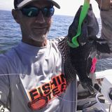 Show #52 7/8/17 NEW Party/Charter Sea Bass limit, Commercial Scup reduction. Dungee crab in CT!