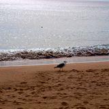 Summer, sea, sounds...