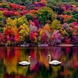 Ben B. - Goldener Herbst