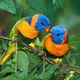 LR121 feat. Birds Of Rhythm