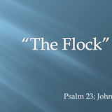 """The """"Body"""" in training -- """"The Flock"""""""