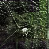 Twin Peetz : Microscopic 006 (November2014)