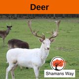 Power Animal Deer