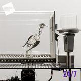 3: Dopamine Detox & Resisting Surveillance   24/7