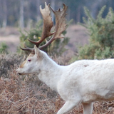 Ep 24: Cisco (fish) of the Great Lakes with Ellen George; LSS reports on Seneca White Deer tour