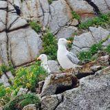 White Birds session