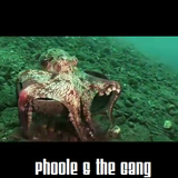@Phoole and the Gang | Show 142 | Cephalopodcast | @IdealClubWorld Radio | 15 April 2016