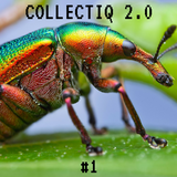 Collectiq 2.0 #1: Insects Are All Around Us