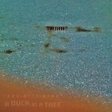 A Duck in a Tree 2015-04-18 | Inner Outer