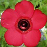 Le son sort des fleurs (hardtek/Psytrance)