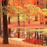 Autumn Objective