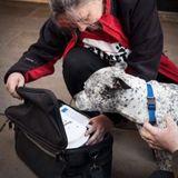 Offbeat| Street Paws Sleepout Special-Rachel Bean & Katja Londa Raising Funds for Homeless Dogs