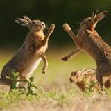 The March Hare mix