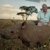 The Story of Life on Earth with Sir David Attenborough