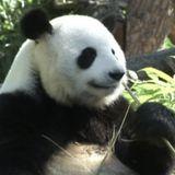 Panda Mix Klassenfahrt 4a