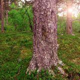 Sun, Wind and Pine Bark
