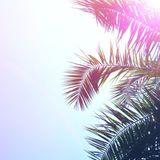 Matt Mus Summer Set 2013