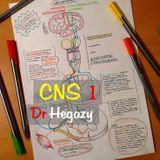 CNS 1 - Dr Hegazy  [Histology]