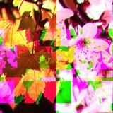 Episode 3: Fall vs. Spring
