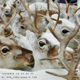  ALL FORMS  Jorvik Radio_17.12.19