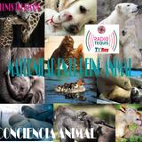 MATERNIDAD EN EL REINO ANIMAL