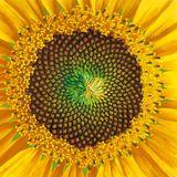 Selector Dhudie - Summer Solstice Progressive trance set